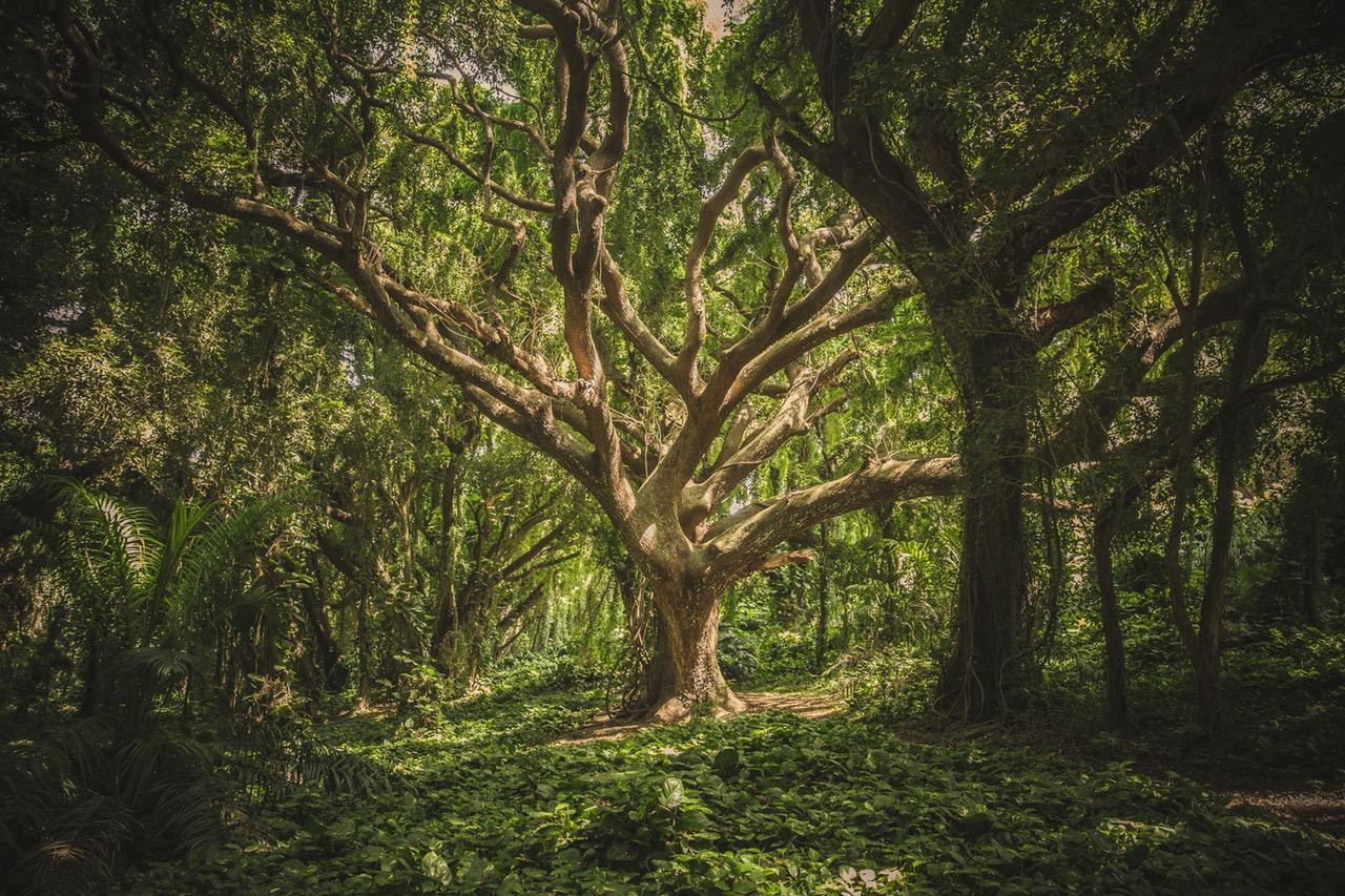 high black forest
