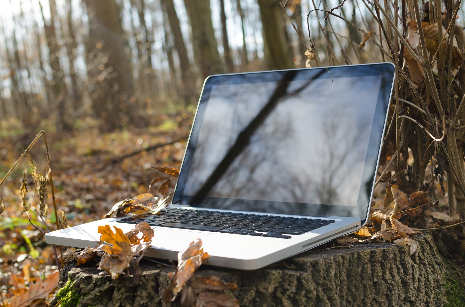 Apple MackBook on Top of Forest Stump - SolVibrations