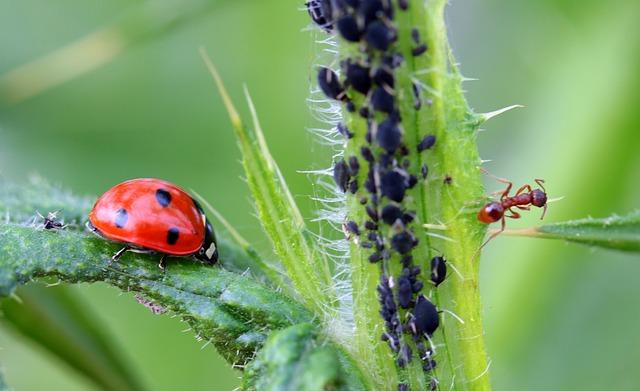 ladybug-1486479_640