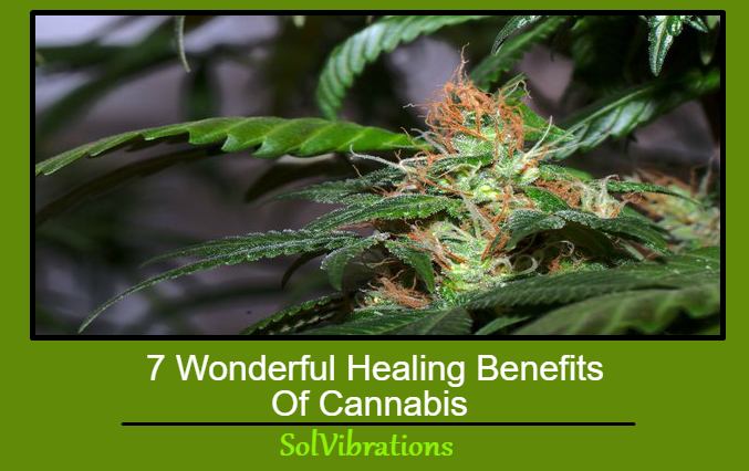 7 Wonderful Healing Benefits Of Cannabis